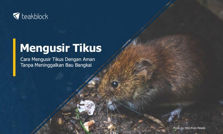 Cara Mengusir Tikus Dengan Aman Tanpa Bau Bangkai